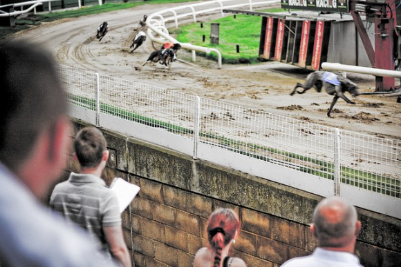 Post image for A Great Night Out Down at the Dogs